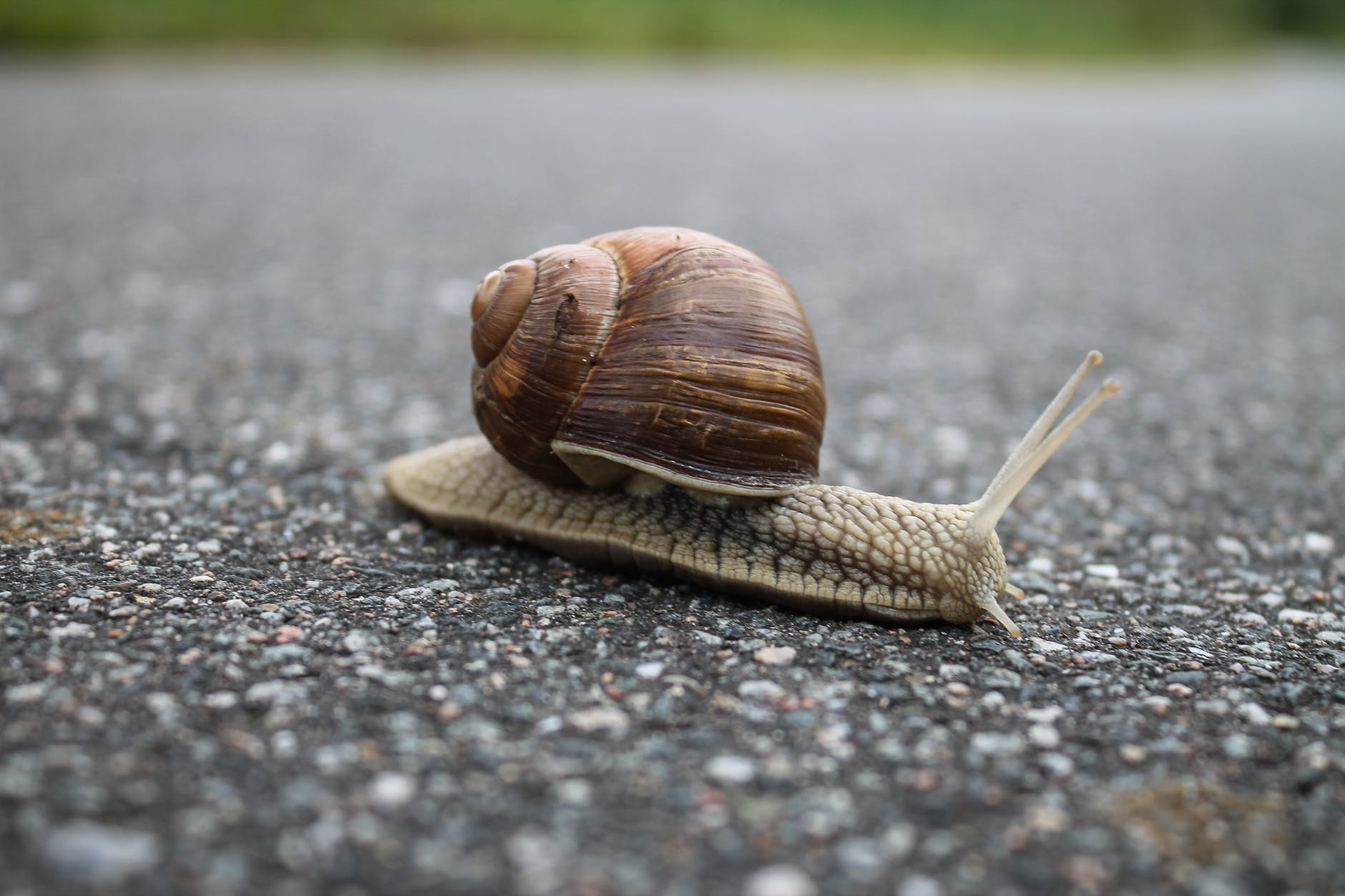Snail Woman Busted